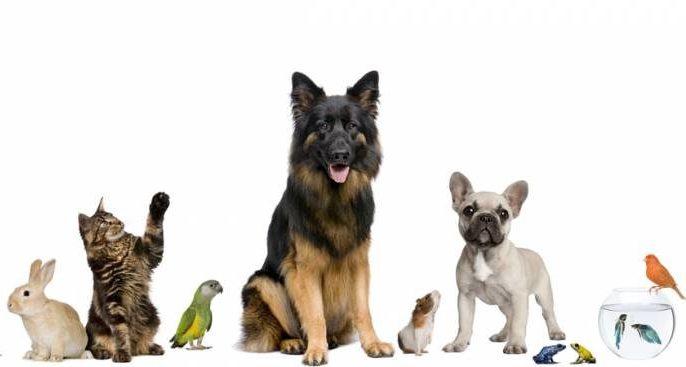 Каждому животному по индивидуальному номеру.