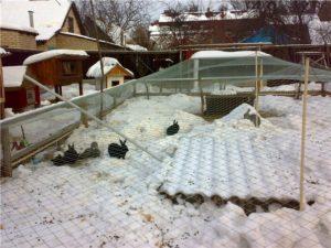 Особенности содержания кроликов зимой.