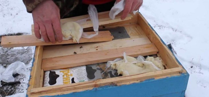 Канди для пчел, как приготовить, когда начинать подкормку?