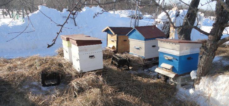 Весенний осмотр пчел
