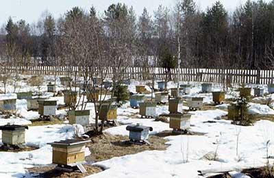 Подготовка точка к выставке пчел
