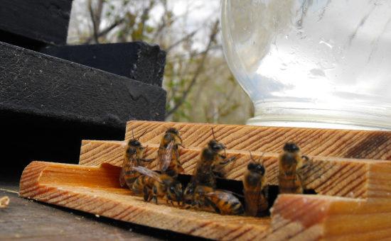 Поилка для пчел своими руками