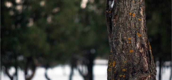 Как оживить слабое дерево,  или Садовая реаниматология