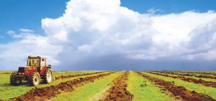 Как организовать фермерское хозяйство с нуля: нюансы открытия агробизнеса