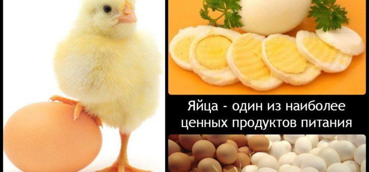 Влияние кормов кур и внешних условий на качество яиц