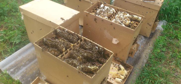 Как стать пчеловодом - покупка пчел